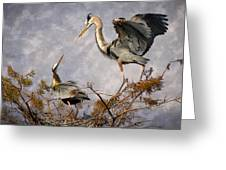 Nesting Time Greeting Card by Debra and Dave Vanderlaan