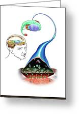 Neurotransmitters And The Brain Greeting Card