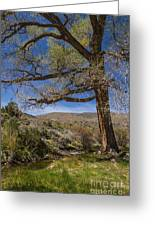 Nevada Cottonwood Greeting Card