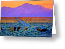 Wild Horse Country  Greeting Card by Jeanne  Bencich-Nations
