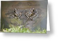 Never Smile At A Crocodile Greeting Card