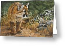 New Adventures - Cougar Cub Greeting Card