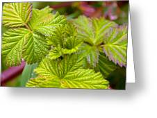 New Black Berry Leaves Greeting Card
