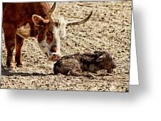 New Born Cow Calf Greeting Card