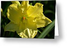 New Born - Lily Greeting Card