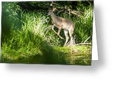 New Buck Greeting Card