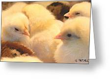 New Chicks Greeting Card
