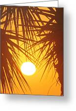 New Day In Paridise 2 Greeting Card by Will Boutin Photos