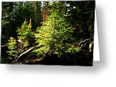 New Forest Greeting Card