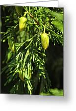 New Growth 25848 Greeting Card