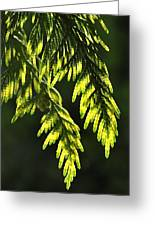 New Growth 25859 Greeting Card