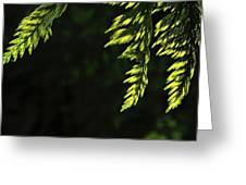 New Growth 25866 Greeting Card