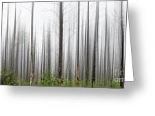 New Jersey Pine Barrens Greeting Card