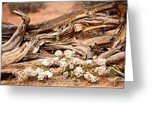 New Life Grows Greeting Card