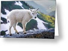 New Life In The High Country Greeting Card