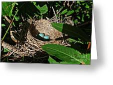 New Life - Robin's Nest Greeting Card