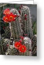 New Mexico Cactus Greeting Card