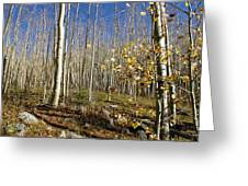 New Mexico Series -  Bare Autumn Greeting Card