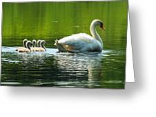 New Mute Swan Family In May Greeting Card