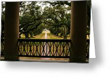 New Orleans Live Oak Greeting Card