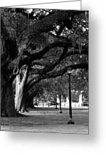 New Orleans Oaks Greeting Card