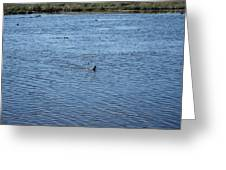 New Orleans - Swamp Boat Ride - 1212108 Greeting Card