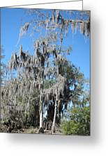 New Orleans - Swamp Boat Ride - 1212128 Greeting Card