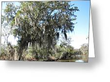 New Orleans - Swamp Boat Ride - 1212129 Greeting Card