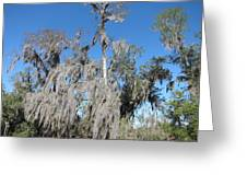 New Orleans - Swamp Boat Ride - 1212138 Greeting Card