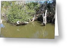New Orleans - Swamp Boat Ride - 1212142 Greeting Card