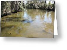 New Orleans - Swamp Boat Ride - 1212143 Greeting Card
