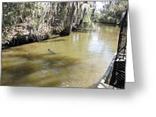New Orleans - Swamp Boat Ride - 1212145 Greeting Card