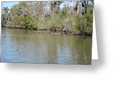 New Orleans - Swamp Boat Ride - 1212157 Greeting Card