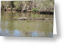 New Orleans - Swamp Boat Ride - 1212159 Greeting Card