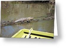 New Orleans - Swamp Boat Ride - 1212160 Greeting Card