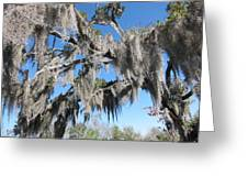 New Orleans - Swamp Boat Ride - 121238 Greeting Card