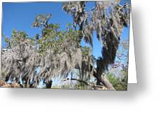 New Orleans - Swamp Boat Ride - 121239 Greeting Card