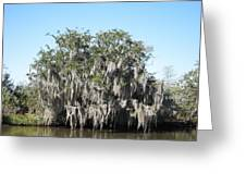 New Orleans - Swamp Boat Ride - 121244 Greeting Card