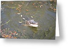 New Orleans - Swamp Boat Ride - 121255 Greeting Card