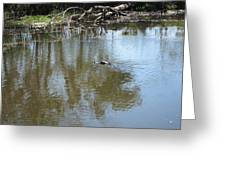 New Orleans - Swamp Boat Ride - 121264 Greeting Card