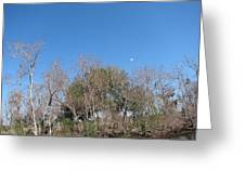 New Orleans - Swamp Boat Ride - 121271 Greeting Card by DC Photographer