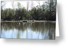 New Orleans - Swamp Boat Ride - 121272 Greeting Card
