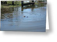 New Orleans - Swamp Boat Ride - 121276 Greeting Card