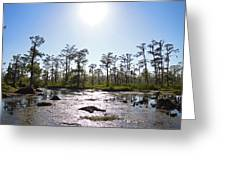 New Orleans Swamp Untouched Greeting Card