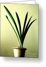 Fanned Leaves Of An Amaryllis Greeting Card