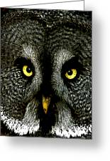 New Photographic Art Print For Sale   Great Grey Owl Greeting Card