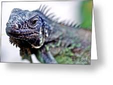 Close Up Beady Eyed Iguana Greeting Card