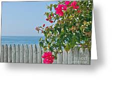 New Photographic Art Print For Sale On The Fence Montecito Bougainvillea Overlooking The Pacific Greeting Card
