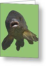 New Photographic Art Print For Sale   Open Mouthed Fish In Green Water Greeting Card