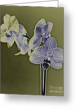 New Photographic Art Print For Sale Orchids 10 Greeting Card